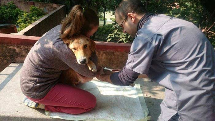 Month Long Rishikesh Animal Rescue Project Organized at Parmarth (15)