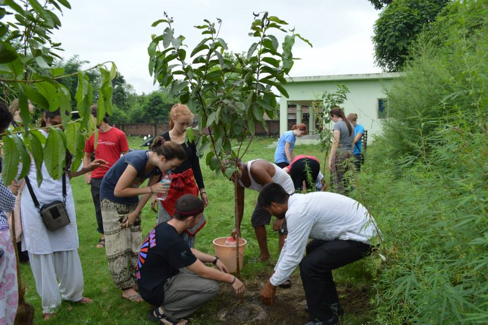 Serving at Parmarth Cow Shelter and Planting Trees (14)