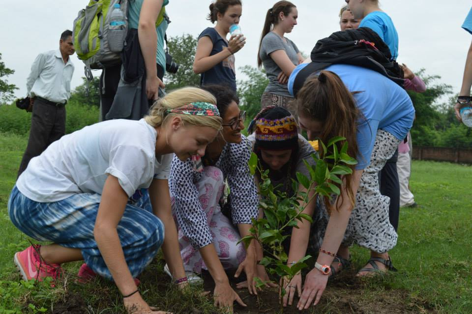 Serving at Parmarth Cow Shelter and Planting Trees (18)
