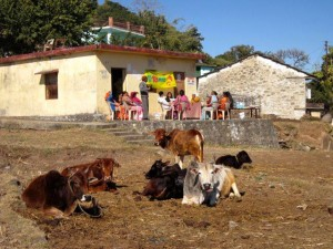 Kimsar Village Camp - 17 January 2015 (1)
